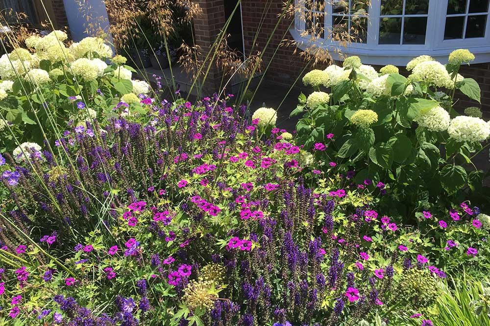 Front-garden-Ashtead-2