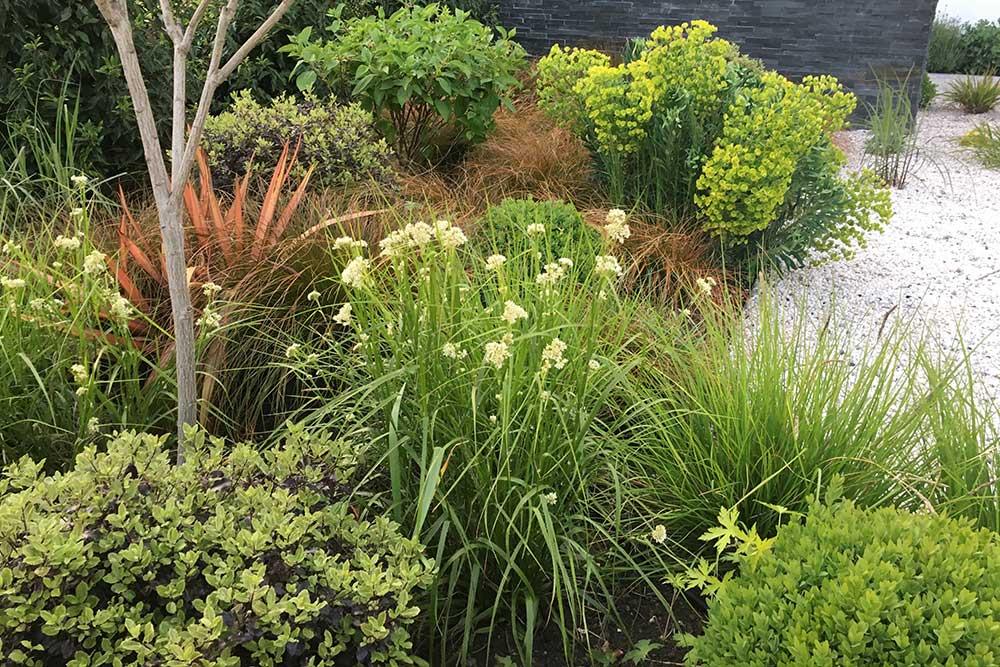 https://greenardendesign.com/wp-content/uploads/2019/09/front-garden-esher-8.jpg