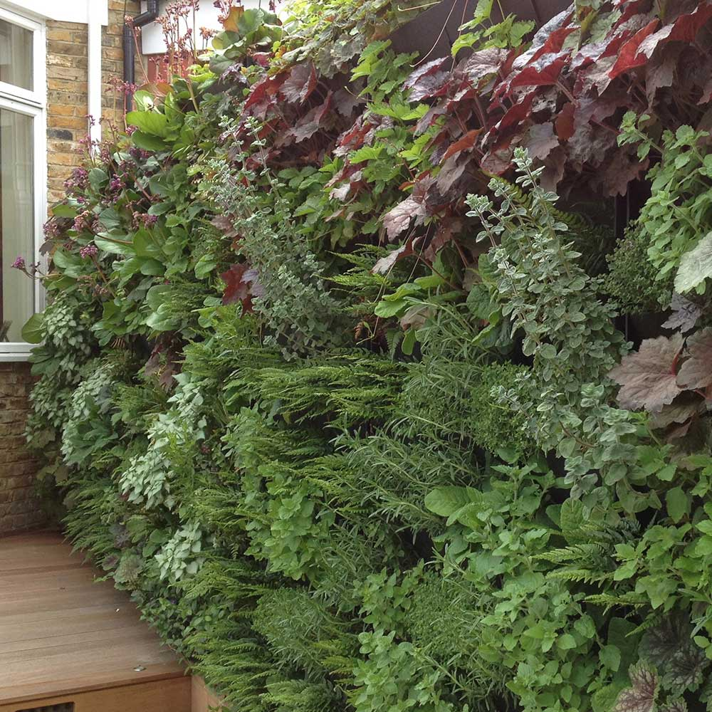 Garden with living wall, Surbiton