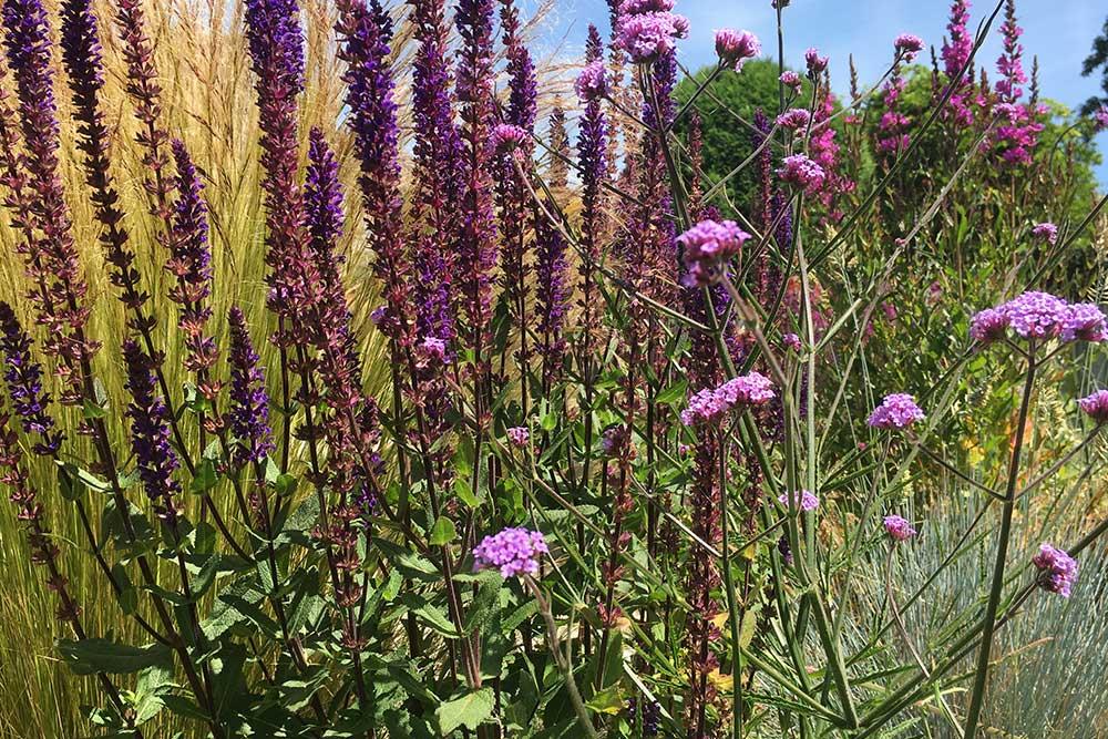 planting-design-ashtead
