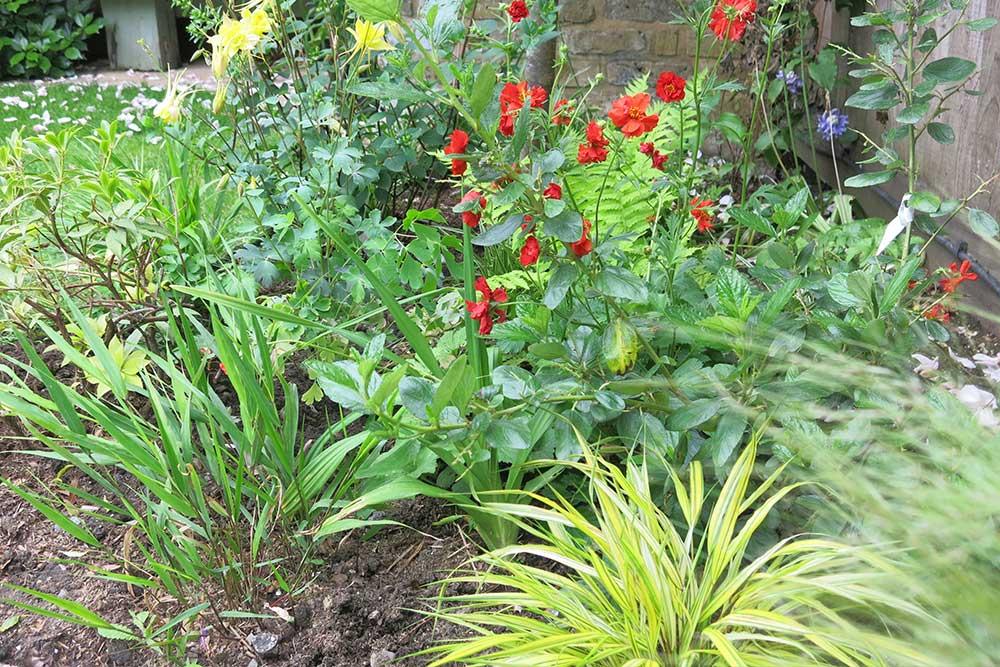 planting-design-teddington-4