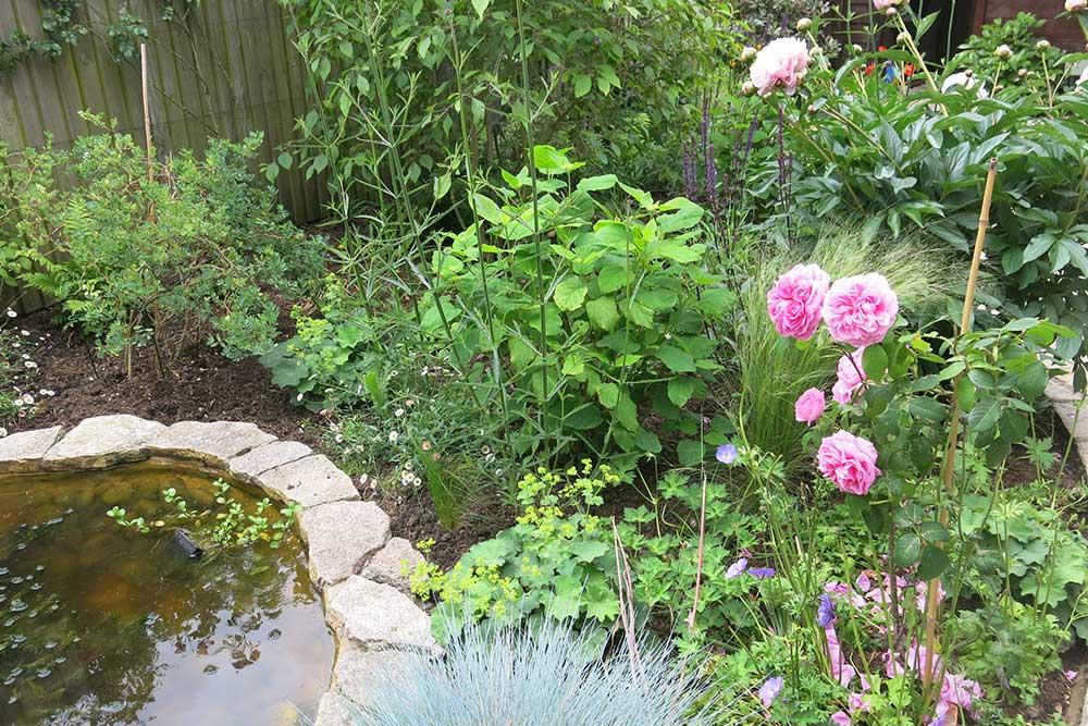 planting-design-teddington-5