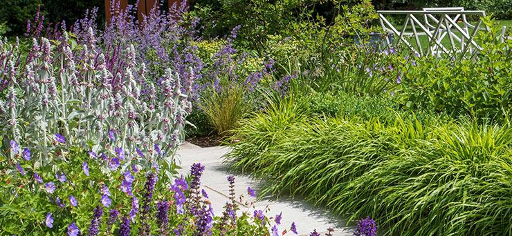 Surbiton Surrey planting design