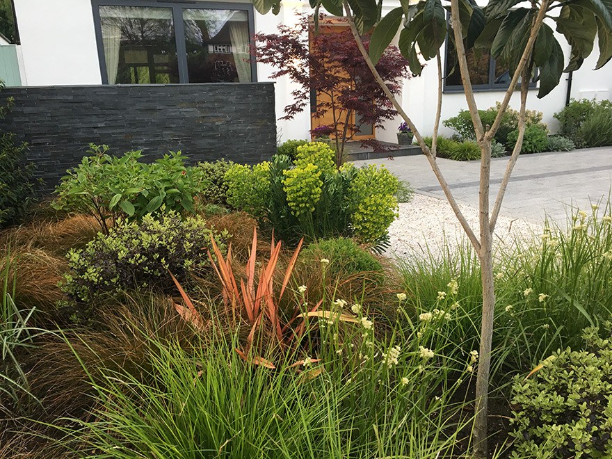 dreaming of a new garden - Euphorbia and Cordyline