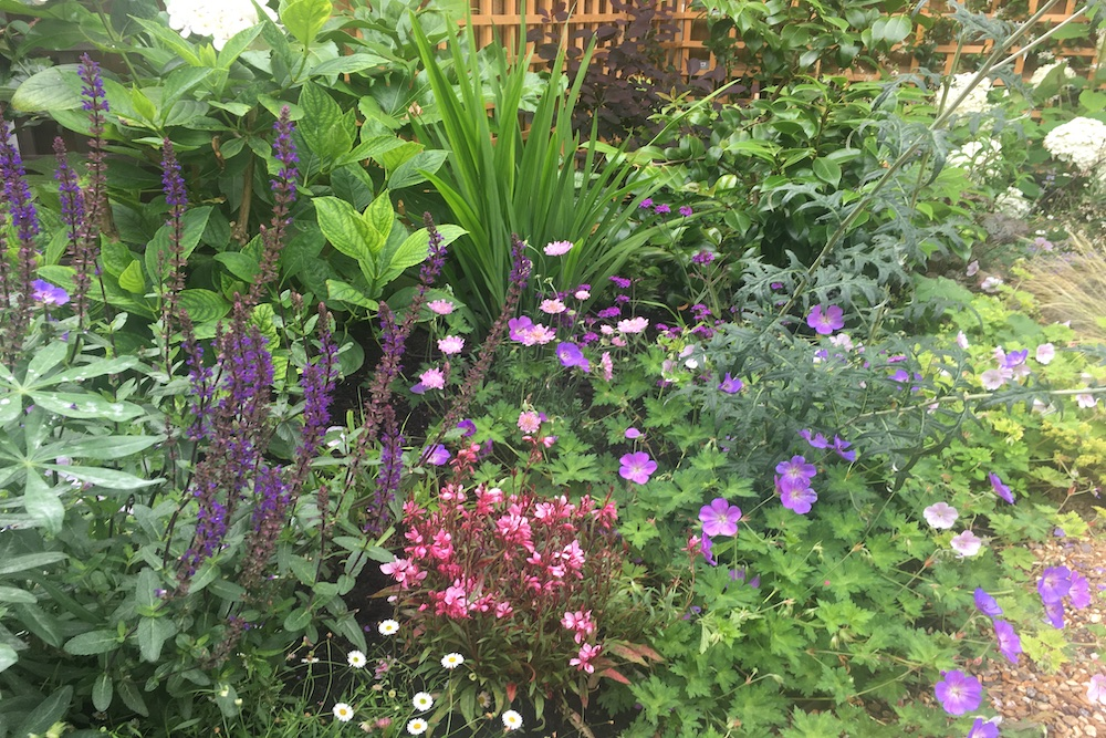 Planting Design Twickenham 5
