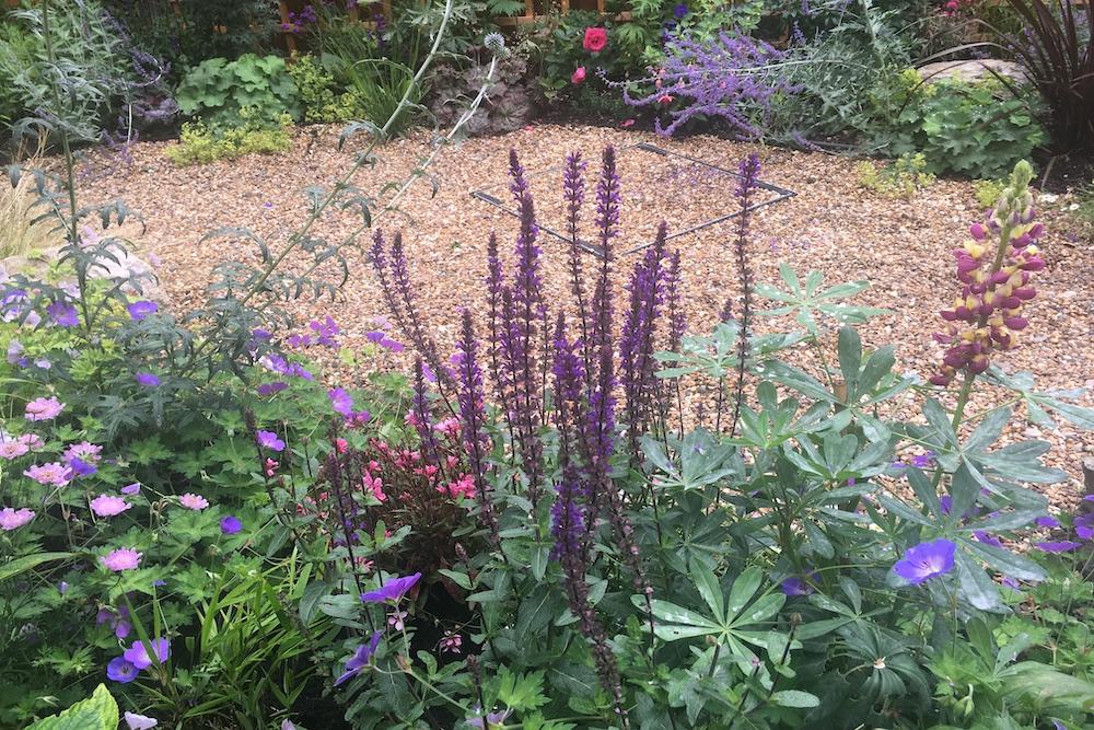 Planting Design Twickenham 8
