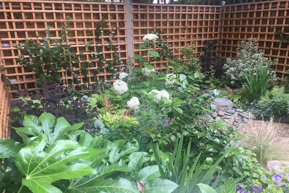 Planting Design Twickenham 9