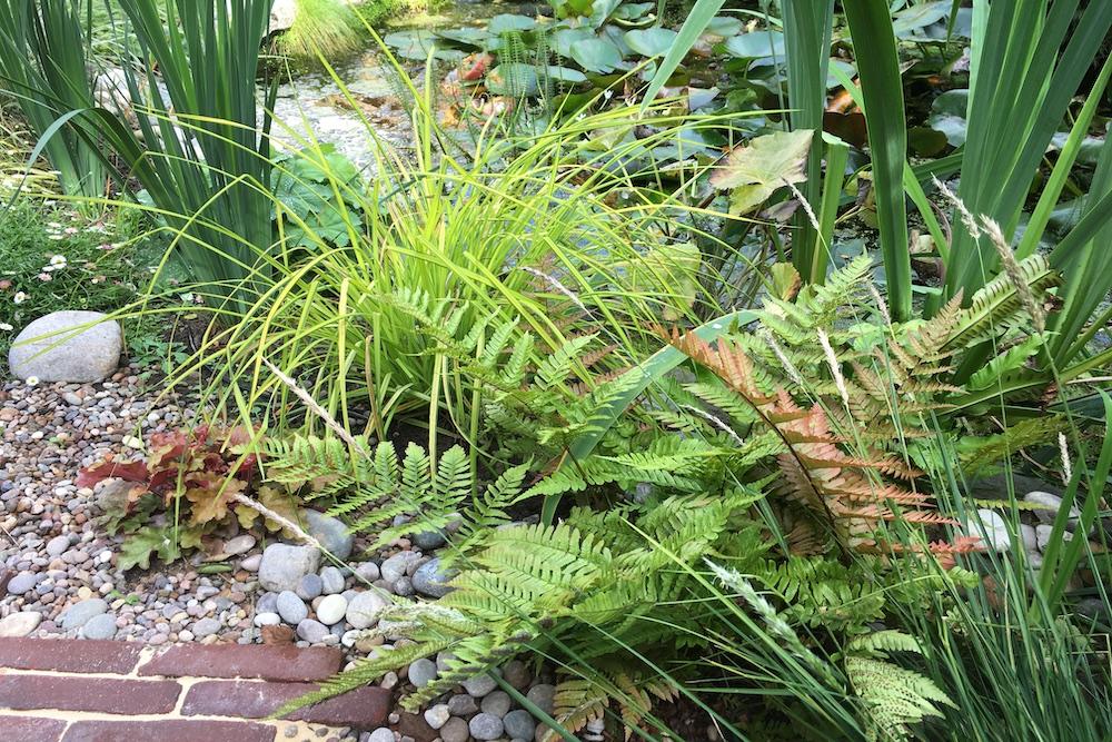 A garden rejuvenation 3, Thames Ditton