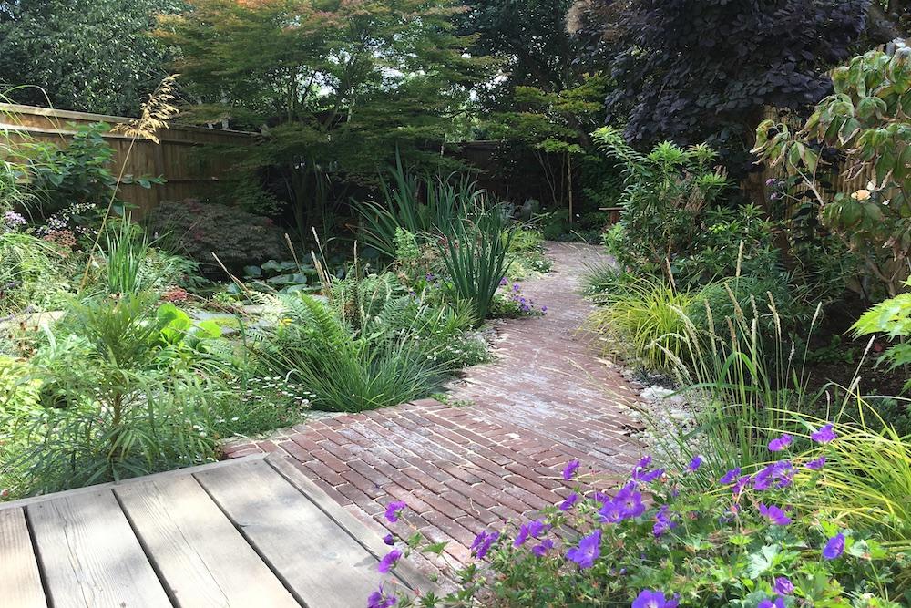 A garden rejuvenation 5, Thames Ditton