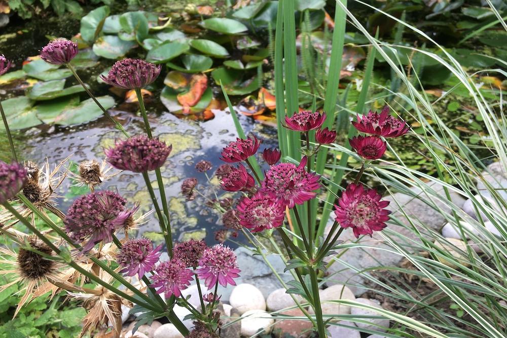 A garden rejuvenation 7, Thames Ditton