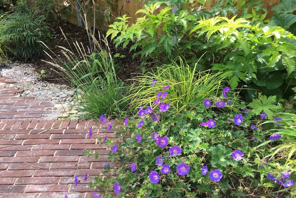 A garden rejuvenation 8, Thames Ditton