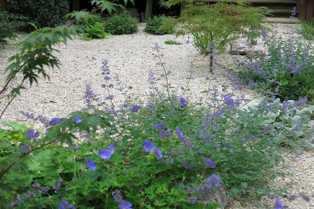 A small gravel garden 5, Carshalton