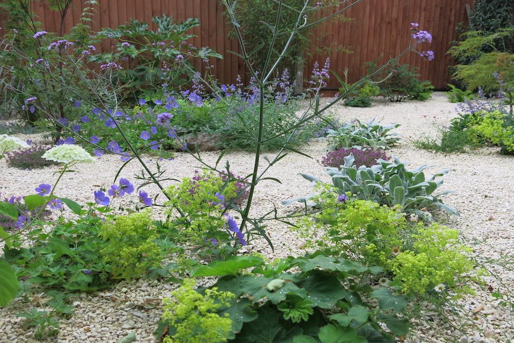 A small gravel garden 6, Carshalton