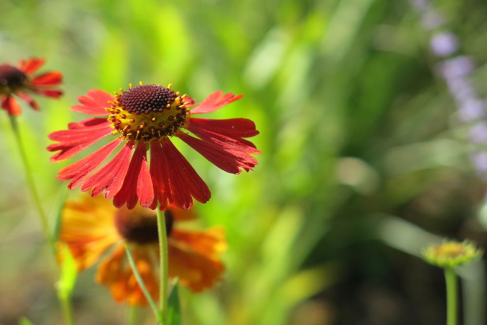 Plant lover's garden, East Molesey 10