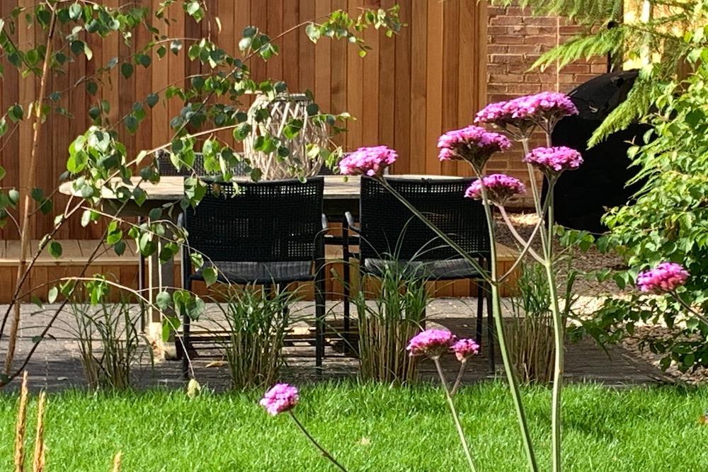 Plant lover's garden, East Molesey 12