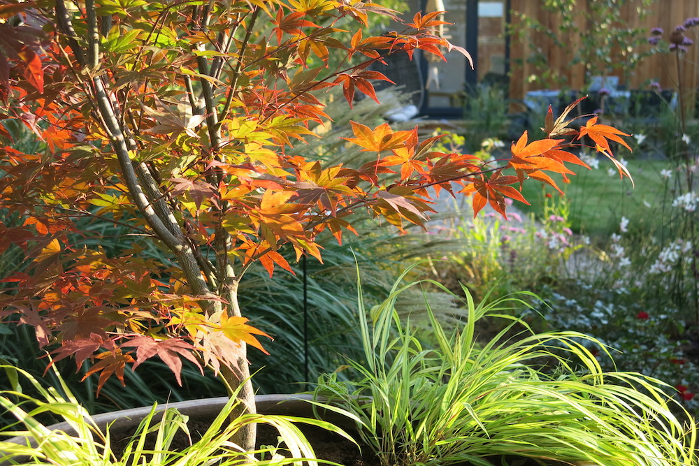 Plant lover's garden, East Molesey 2
