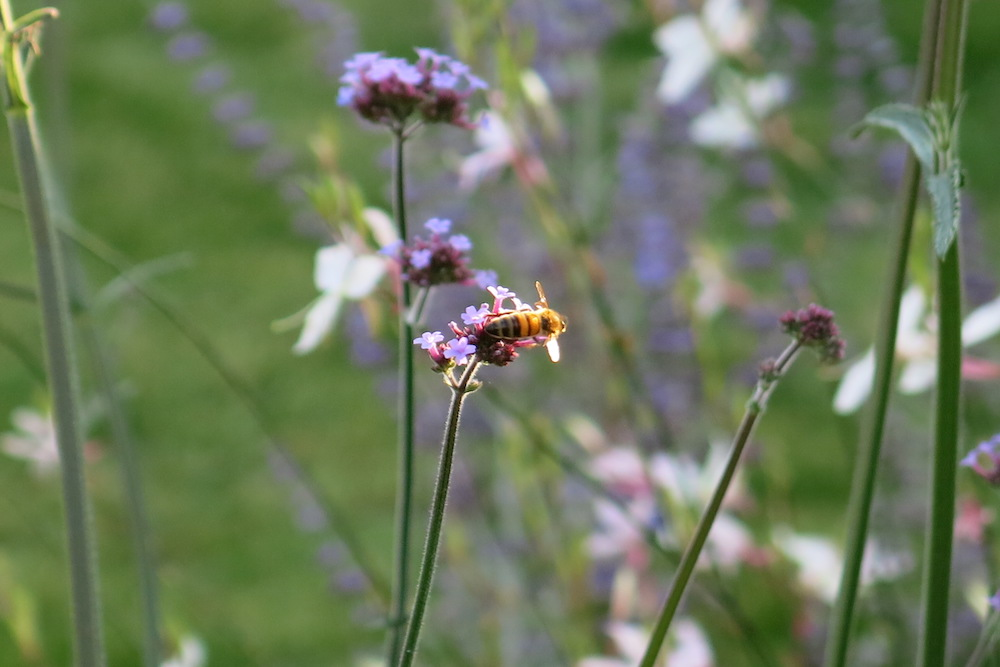 Plant lover's garden, East Molesey 3