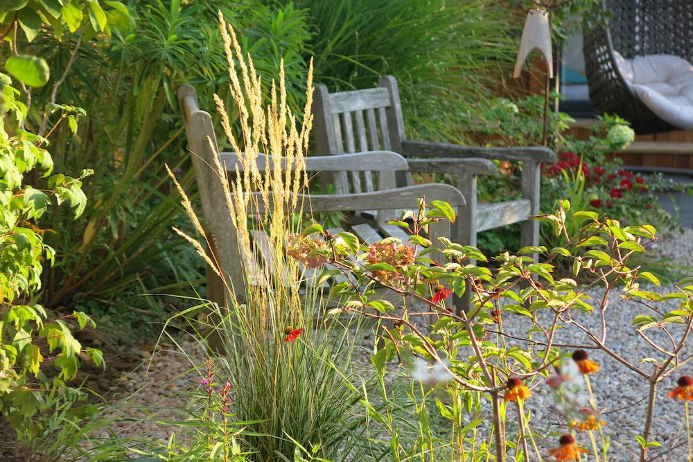 Plant lover's garden, East Molesey 4