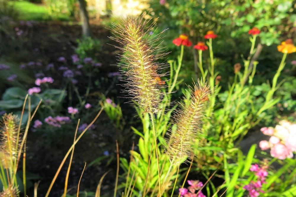 Plant lover's garden, East Molesey 5