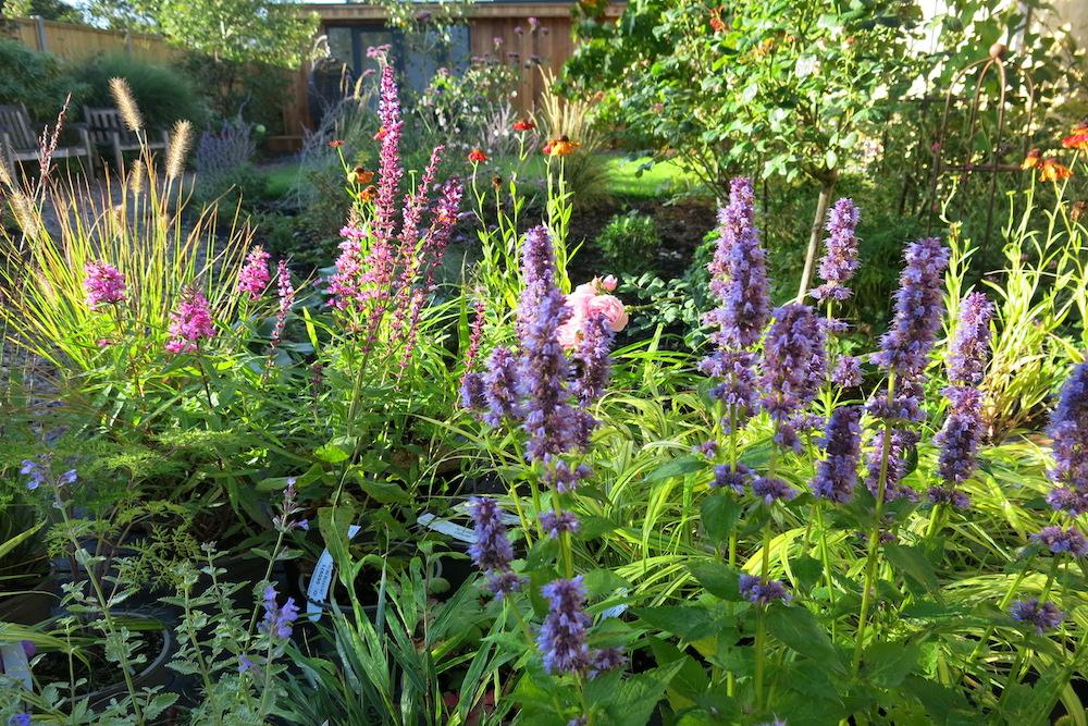 Plant lover's garden, East Molesey 7