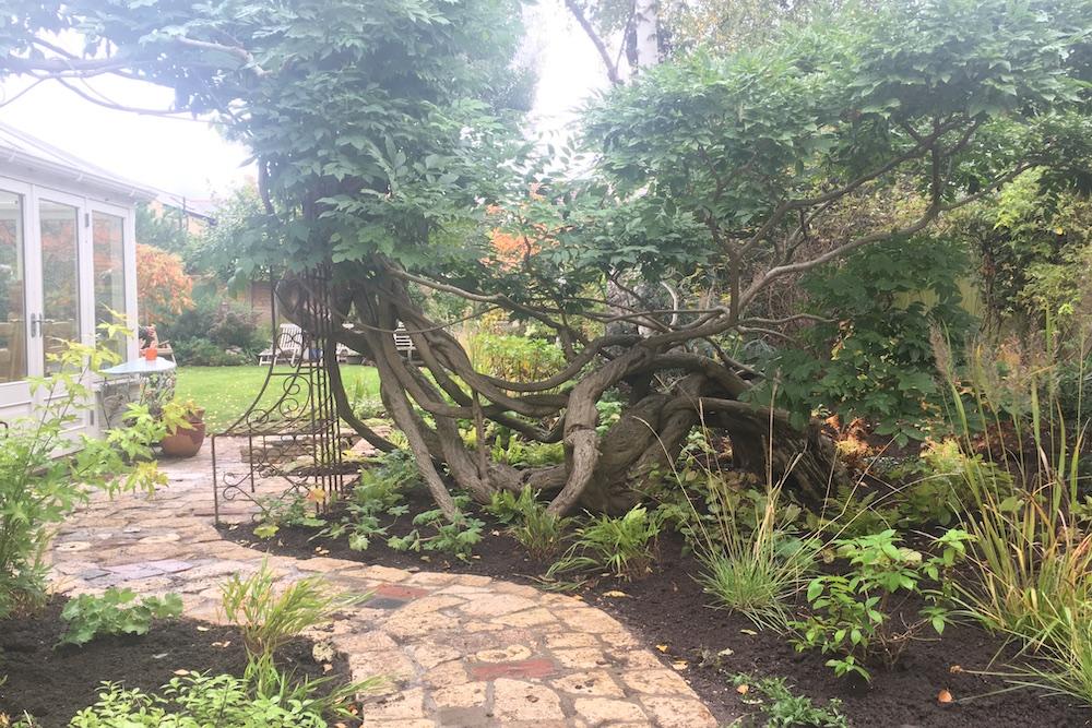 Planting Design, Teddington 2