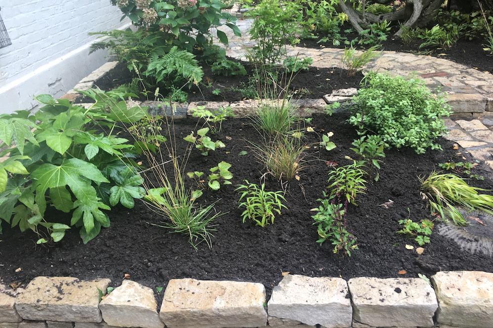 Planting Design, Teddington 5