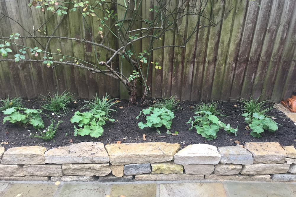 Planting Design, Teddington 6