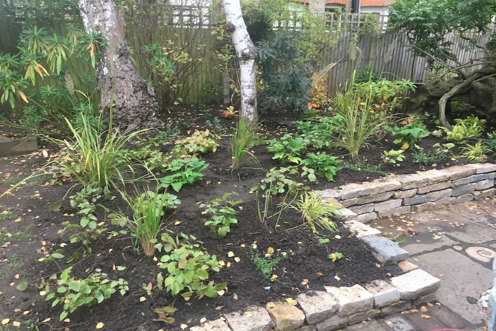 Planting Design, Teddington 8
